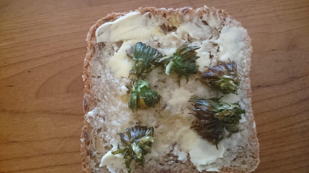 Voikukka maistuu leivän päällä